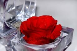 Nesmrtelná růže červená
