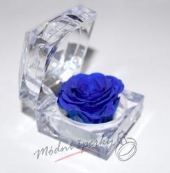 Nesmrtelná růže modrá